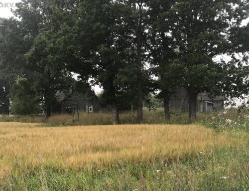 Maja – Vahe-Kasa, Mõniste, Rõuge vald, Võrumaa